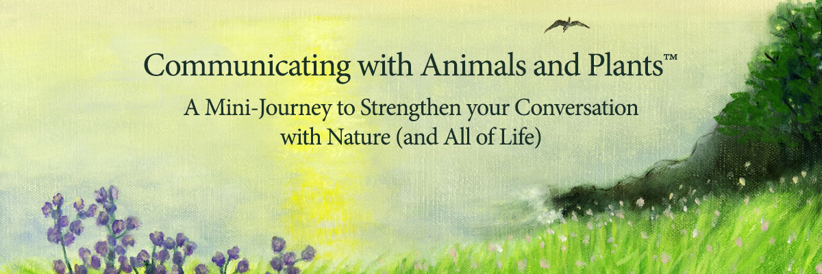 Communicating with Animals and Plants™ - Amelia Vogler