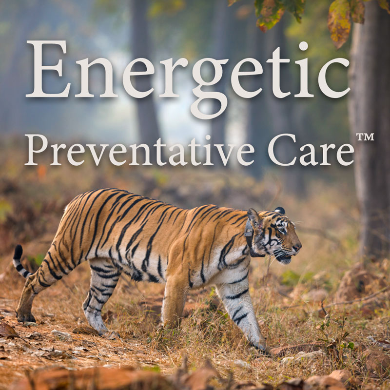 Energetic Preventative Care Program - Amelia Vogler